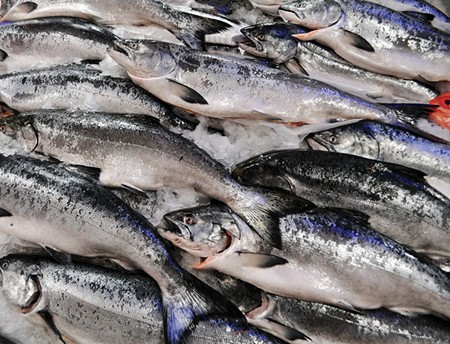 ON ICE California's ongoing drought is making life difficult for the state's beloved king salmon.