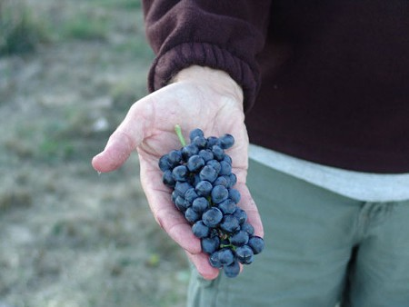 ONE LOVE Halcon Vineyards' Syrah is made from a single vineyard 2,500 feet above sea level.