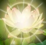 68c07f22_flowering_lotus.jpg
