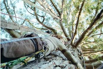 treesitters-0319.jpg