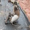 Trouble on Albatross Island