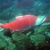 Photograph courtesy NOAA