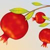 Pomegranate Pleasures