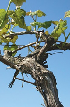 Possessed 'Vines'