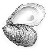 oysterpalooza.jpg