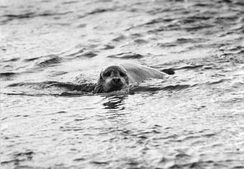 sea-lions2-9749.jpg