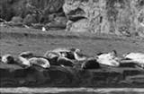 sea-lions3-9749.jpg