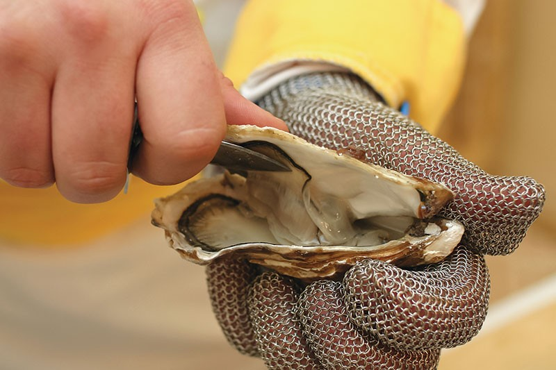 SHELL SHOCKED  The future of Drakes Bay Oyster Company is in the hands of the U.S. Supreme Court.