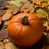 The Great Pumpkin Pie-Off
