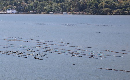 TROUBLED WATERS Tomales Bay's oyster farms are grappling with ocean acidification. Red tides can make matters worse. - KATHLEEN WILLETT