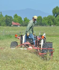 HAY YOU! Stuart Schroeder rocks the tractor on the outskirts of Sebastopol. - KAREN PREUSS