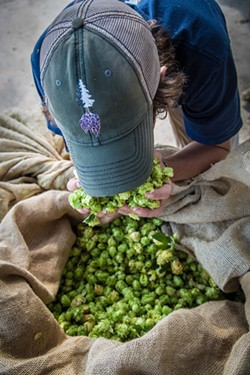 STOP AND SMELL THE HOPS While hard to grow, locally grown hops have more character, says Fogbelt Brewing co-founder Paul Hawley.