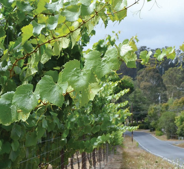 Wine Road The climate of Cider Ridge west of Sebastopol has elements of the Russian River Valley and the cooler coastal zone to the west.