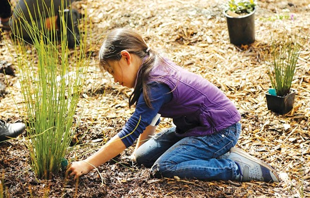 GROUNDED A young 'daily actor' plants some drought-tolerant vegetation at a Daily Acts workshop. - LESLIE CURCHACK
