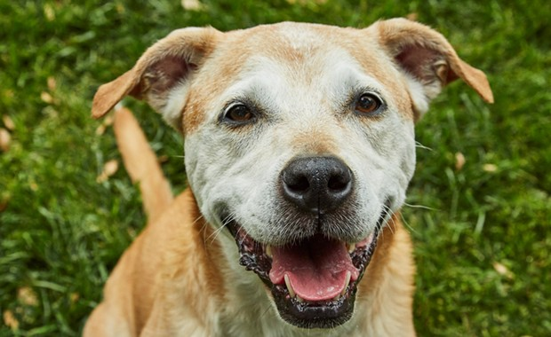 North Bay Nonprofit Sanctuary Launches 'Saving Senior Dogs Week'