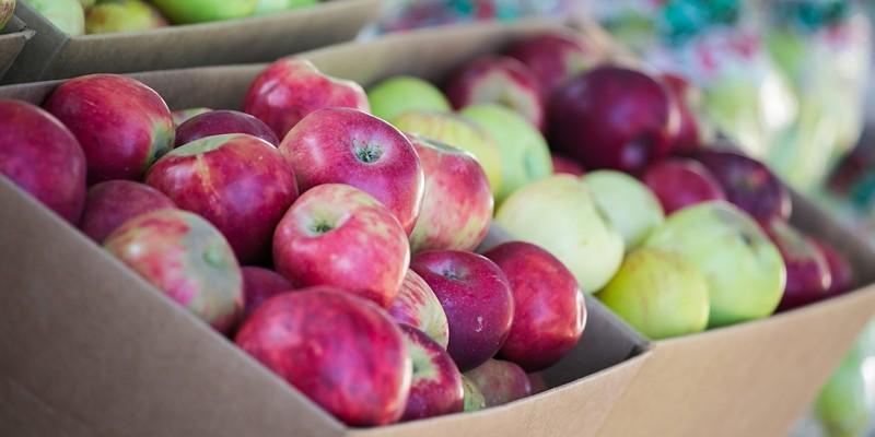 'Grav & Go!' Pop-Up Replaces Canceled Gravenstein Apple Fair