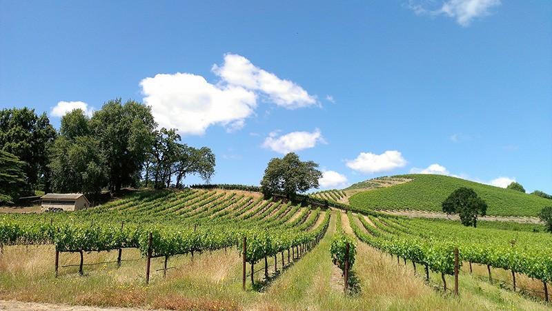 MILES OF VINES The omnipresence of vineyards in Sonoma County has some residents saying 'enough is enough.'