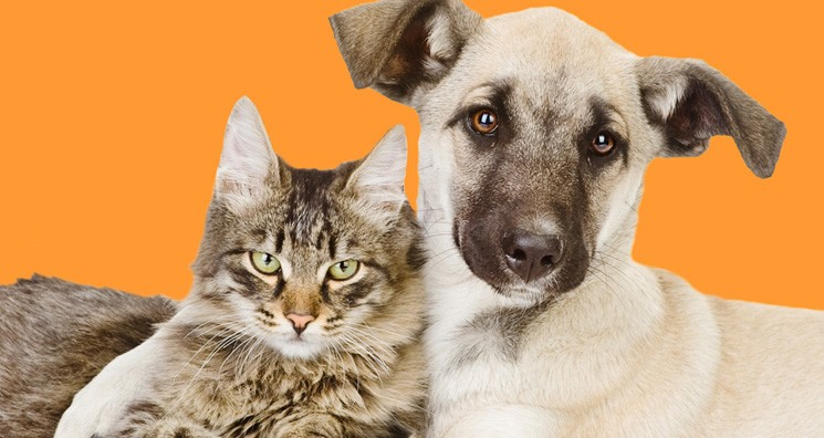 napa-humane-website-profile-image.jpg