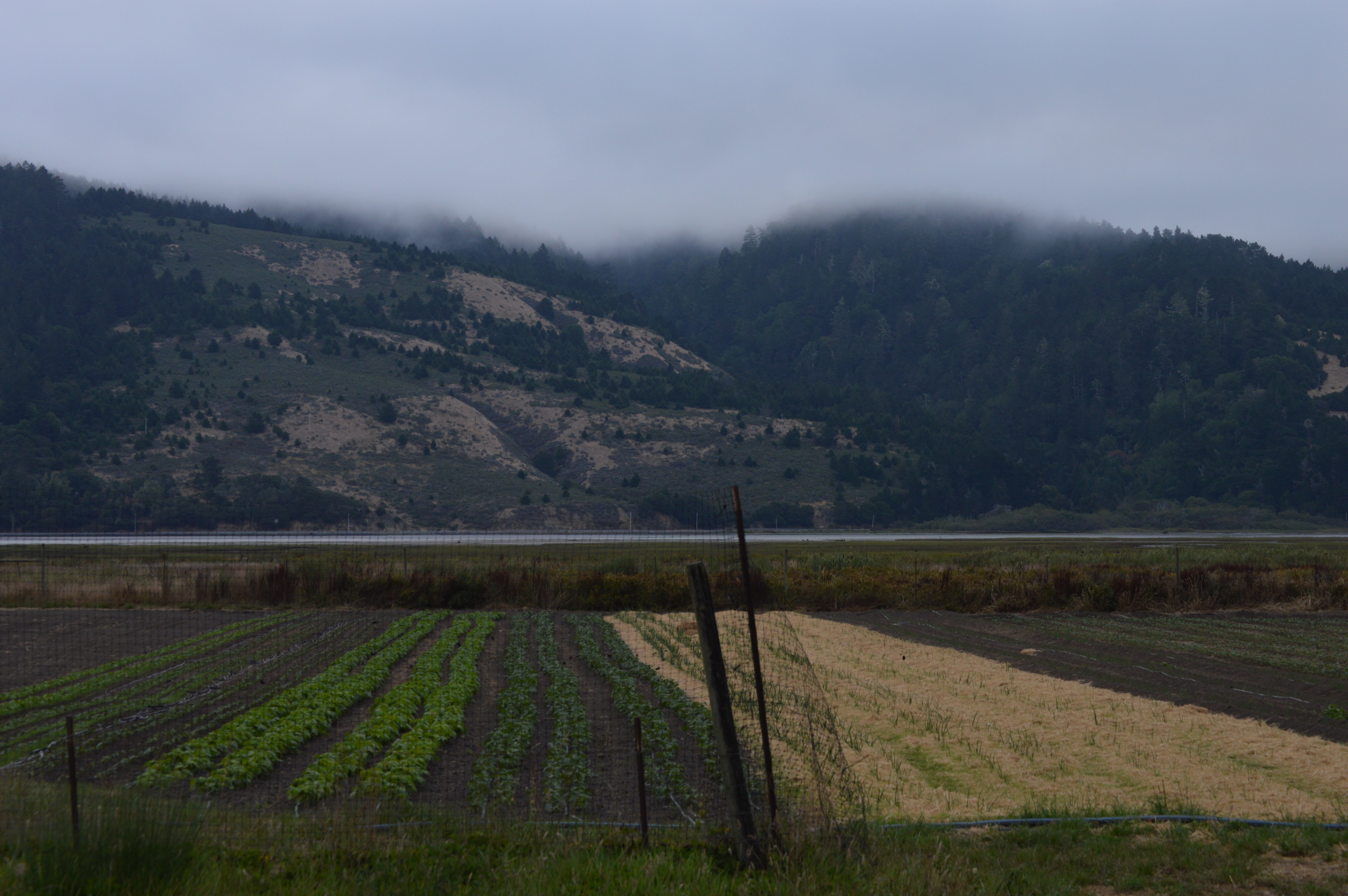 Kale a bunga star route farms sold to the university of for Fish and farm sf