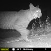 Wildlife Camera Workshop
