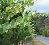 <p><b>Wine Road</b> The climate of Cider Ridge west of Sebastopol has elements of the Russian River Valley and the cooler coastal zone to the west.</p>