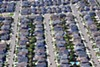 <p><b>Little Boxes</b> Will Santa Rosa vouch for its Section 8 tenants to get buy-in from reluctant landlords?</p>