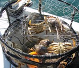 State Delays Commercial Dungeness Crab Season Until Mid-December