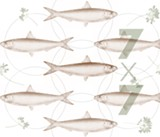 Dec. 19: Fish Food in Healdsburg