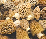 Morel Majority