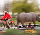 Rhino Ride Coming to the North Bay
