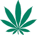 <i>Cannabis Codes of California</i>: An Instant Classic!