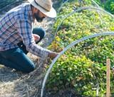 Oct. 1: New Harvest in Fulton
