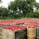dfcc699c_sonoma_county_apples-_square.jpg