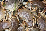 BACK IN BUSINESS  After a disastrous crab season last year, this year looks to be a good one.  But watch out for 2017.