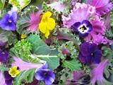 772b039c_edible_flowers.jpg