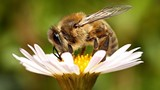 2b334696_new_bee_picture-_smaller.jpg