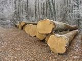 45075945_troncs_d_arbres.jpg
