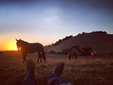 39e20243_horses.jpg