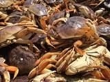d4c65eda_crab_resized_650x400.jpg