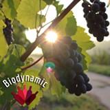 e125ffbe_biodynamic_wines_photo_-_square_cropped_1280_x_1280.jpg