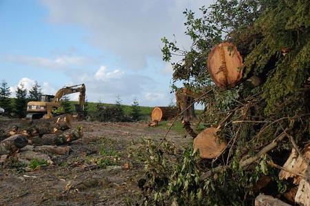 UNSCENIC CORRIDOR Trees are cut down by winemaker Paul Hobbs to plant Pinot Noir along Gravenstein Highway in Sebastopol. - ALMA SHAW