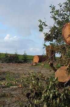 UNSCENIC CORRIDOR Trees are cut down by winemaker Paul Hobbs to plant Pinot Noir along Gravenstein Highway in Sebastopol.