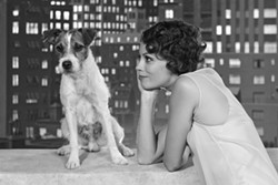 THE WEINSTEIN COMPANY - BARKING UP THE RIGHT TREE: Folks expecting major Oscar-night victories for The Artist, starring Uggie and Best Supporting Actress nominee Berenice Bejo, will probably win their office pools.