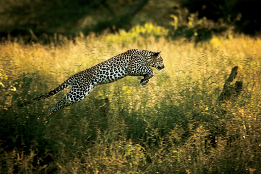 Beverly Joubert's 'Life Among the Leopards — 2004-2005'