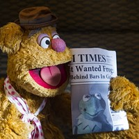 BLACK AND WHITE AND GREEN ALL OVER: Fozzie catches up on the day's news in Muppets Most Wanted. (Photo: Disney)
