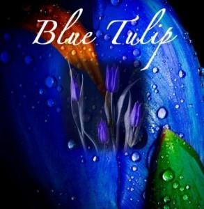 blue_tulip_final_2-453x463
