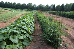 ANGUS LAMOND - BOUNTILICIOUS: Vegetables at New Town Farms in Waxhaw