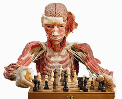 BODY WORLDS - BRAINY: The Chess Player, included in the Body Worlds exhibit at Discovery Place