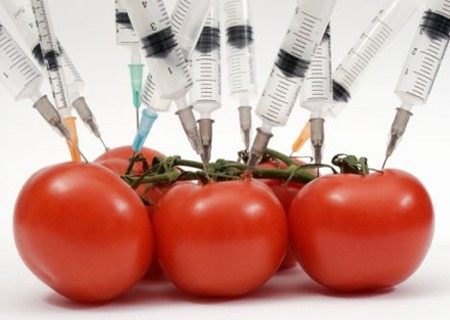 GMO-Feature-Slideshow.jpg