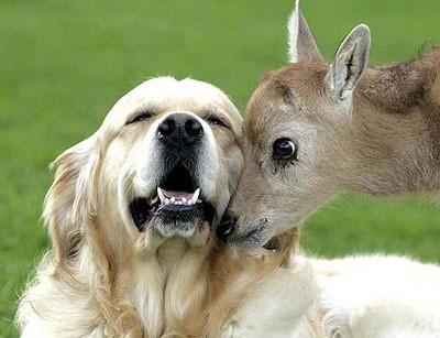 deer-dog2.jpg